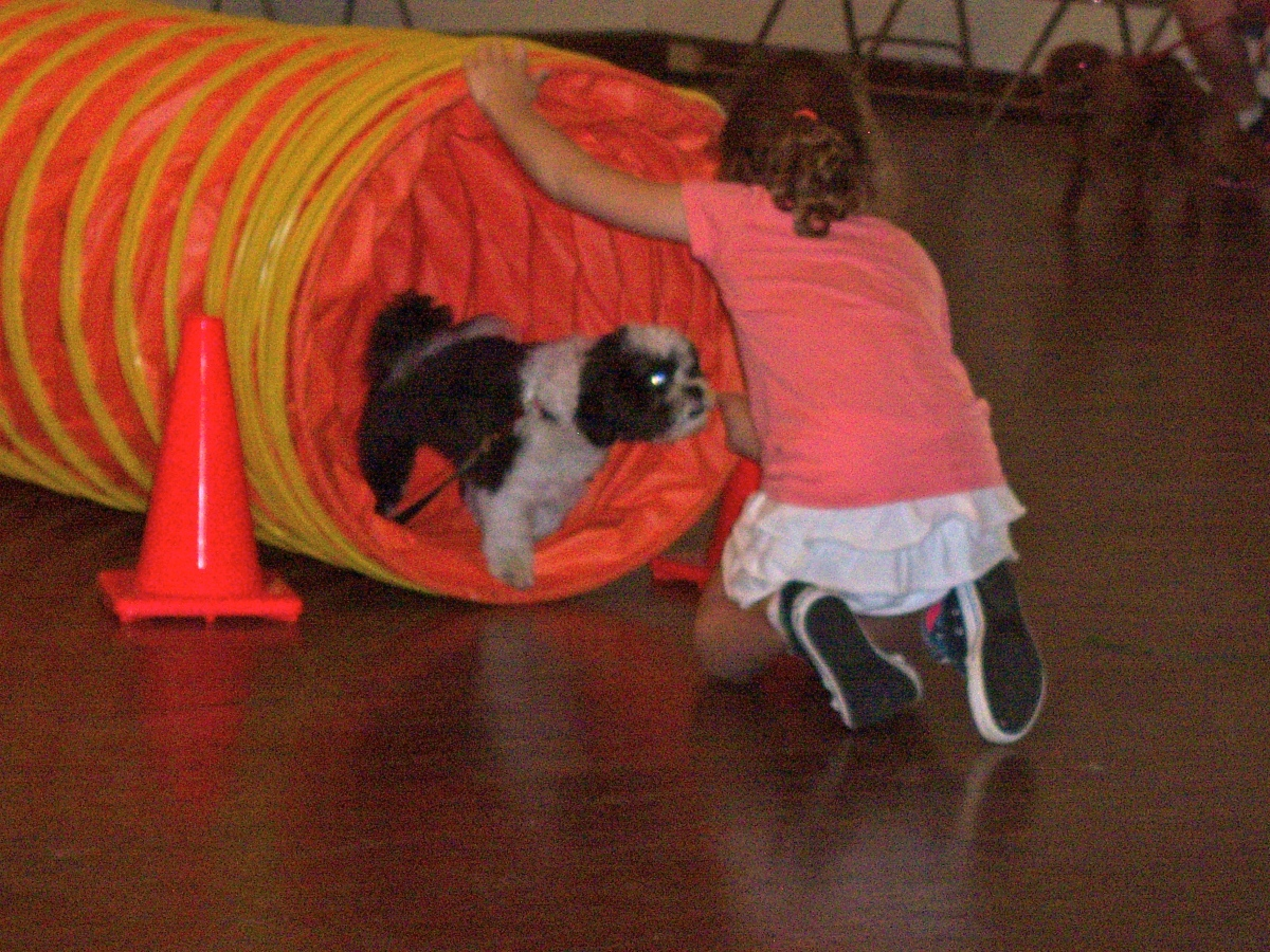 Dog Tricks are the Key to Getting Your Kids Involved inTraining