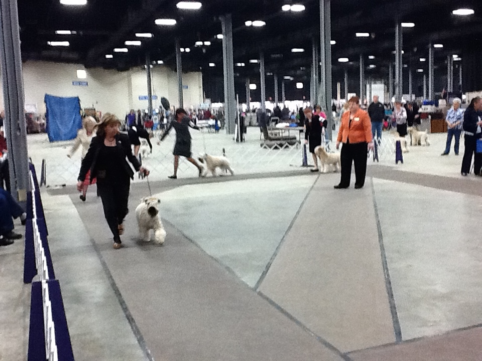 Teach your dog to walk nicely onleash